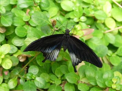 蝴蝶, 昆虫, 翅膀, 动物世界