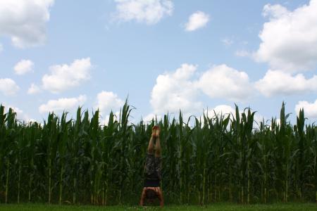 瑜伽, 电源, 演, 女孩, 健康, 女性, 锻炼