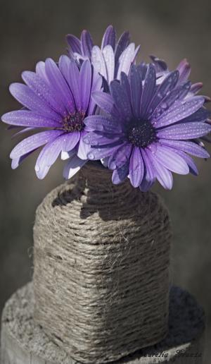 花, 紫色, 花, 紫色的小花, 春天, 脆弱, 自然