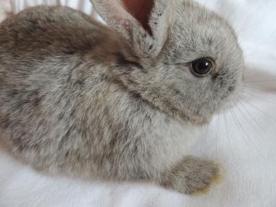 兔子, 视图, 眼睛, 耳朵, fousky, 脸上, 灰色