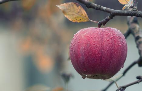 苹果, 秋天, 多汁, 食品, 秋天, 水果, 红色