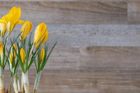 番红花, 花, 植物, 黄色, 花, 黄色春天花, 春天的花朵