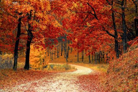 秋天, 秋天, 红色, 赛季, 伍兹, 自然, 叶子