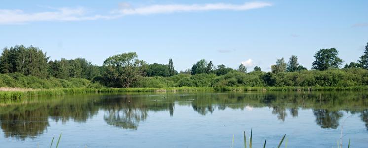 景观, 池塘, 水, 镜像横向级别, 天空, 树木, 自然