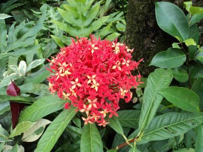 红三, 红色的花, 小花, 小花, 叶子, 花瓣, 干
