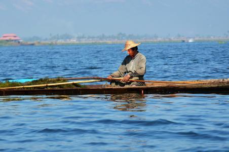 费歇尔, 单腿赛艇, 茵莱湖湖, 茵莱湖, inlesee, 缅甸, 鱼