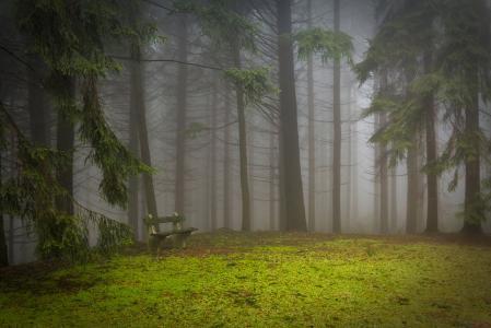 松树, 森林, 垫, 林间空地, 薄雾, 神秘, 松木
