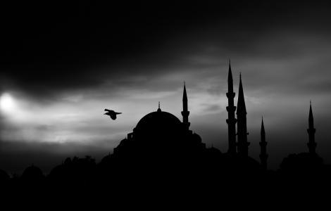 鸟, 黑白, 黑暗, 剪影