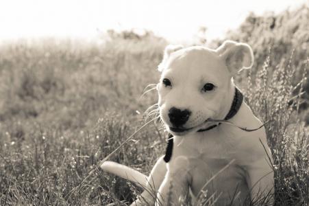 狗, 夏季, 动物, 狗眼, 小狗, 白狗, 白色