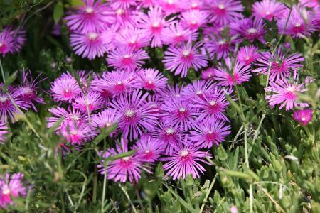 松树国家, 花, 植物, 自然, 春天, 粉色, 漂亮