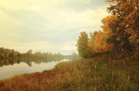 森林, 自然, 景观, 多彩, 孤独, 秋天, 树木