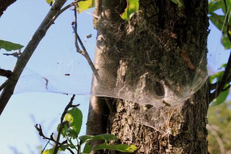 蜘蛛, 鸟巢, 蜘蛛网, 隧道, 昆虫, 隧道网, 捕食者