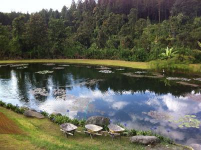 湖, 森林, 天空, 景观, 树, 森林, 自然