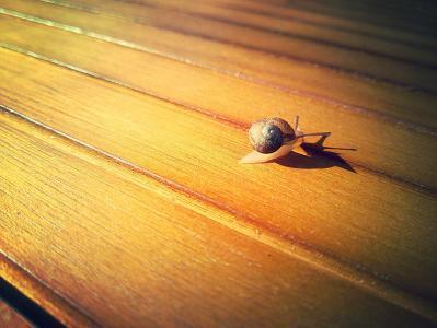 蜗牛, 自然, 动物, 贯穿, 速度, 木材-材料, 棕色