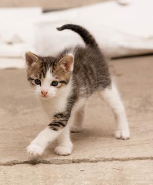 友谊, 猫, 小的猫, 动物, 基蒂, 家猫, 宠物