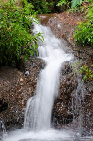 丰沙尔, 马德拉岛, 葡萄牙, 植物园, 植物园, 花园, 水中跑步