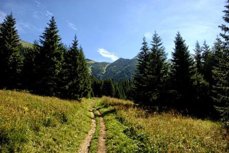 塔特拉, 斯洛伐克, 景观, 顶视图, 山脉, 视图, 自然
