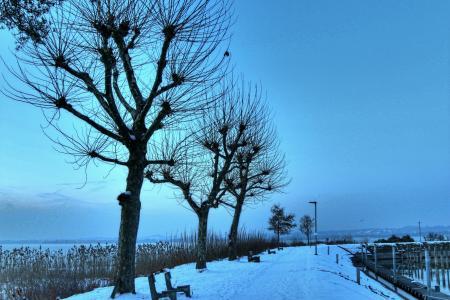 康斯坦茨湖, 布雷根茨, 冬天, 端口, 冷的自然, 晚上, 奥地利