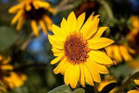 花, 自然, 植物, 黄色的花