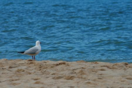 海鸥, 鸟, 海滩, 海, 沙子
