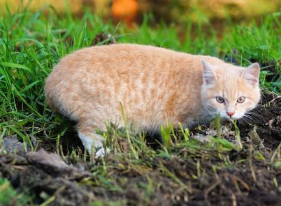 猫, 年轻的动物, 家猫, 小猫, mieze, 嬉戏, 注意