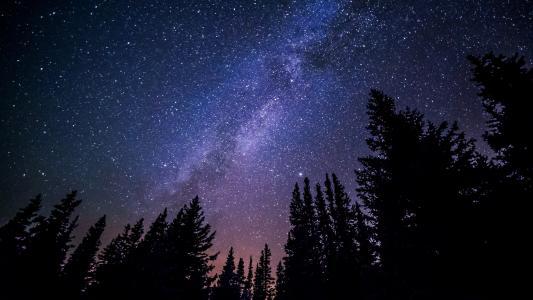 森林, 晚上, 天空, 繁星点点, 星星, 明星-空间, 天文学