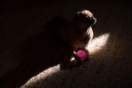 在阴影的狗