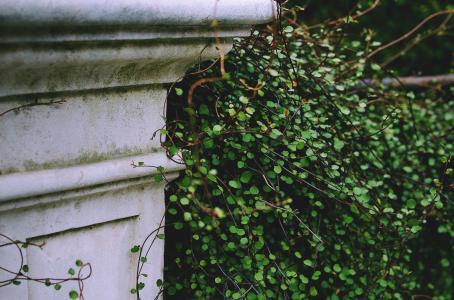 花园, 绿色, 建筑, 布什, 老, 历史, 遗产