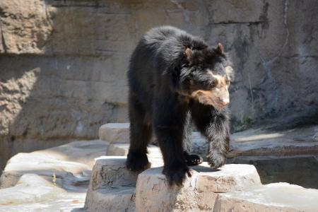 熊, 动物园, 野生动物, 动物, 自然
