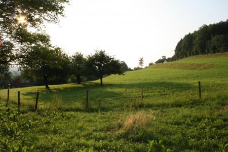 太阳, 早上, 牧场
