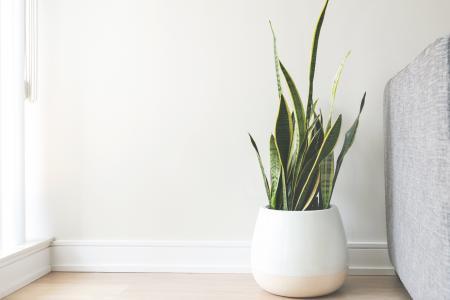 白色罐的议院植物