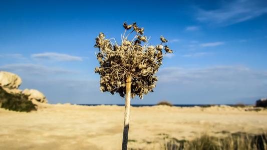 乾草, 收获, 塞浦路斯, 土壤, 夏季, 口渴, 烧了