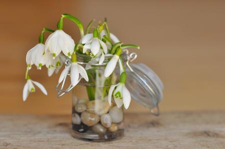 山谷的百合花, 雪莲, 装饰玻璃, 玻璃, 石头, 花瓶, 罐子里