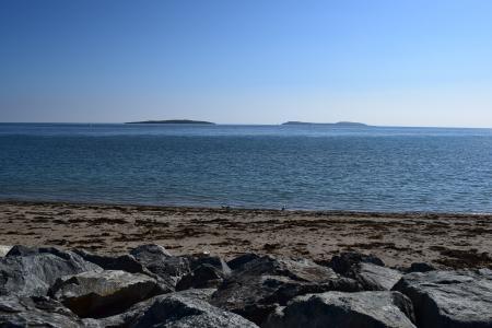 海, 海滩, 海鸥, 蓝色, 水, 在海边, 滩海