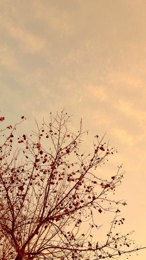 天空, 发光, 木材, 冬天