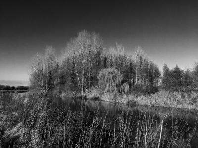 河, 树木, 几点思考, 水, 景观