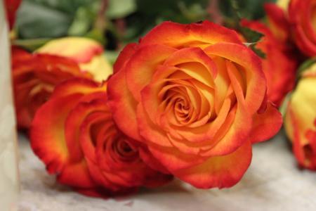 玫瑰, 橙色, 黄色, 美丽, 开花, 多彩, 爱