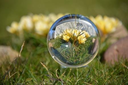 球, 春天, 番红花, 黄色, 关闭, 自然, 草