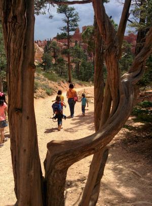 布莱斯峡谷, 风景名胜, 国家, 旅行, 犹他州, 公园, 美国