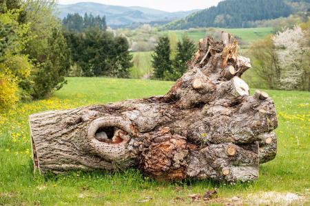 树, 日志, 艾弗尔, 山脉, 纠结, 孔, 根