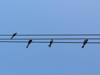 鸟, 接线硬度, 天空