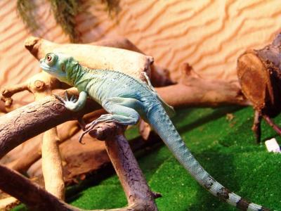 动物, 动物园, 蜥蜴, 爬行动物