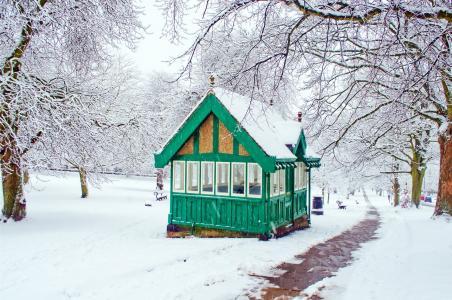 白雪皑皑, 雪, 下雪, 四季, 冬天, 树, 没有树叶的树