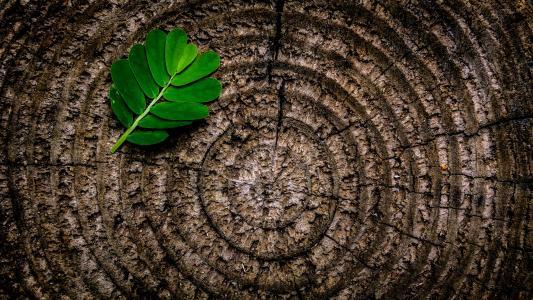 摘要, 棕色, 植物区系, 绿色, 叶, 自然, 模式