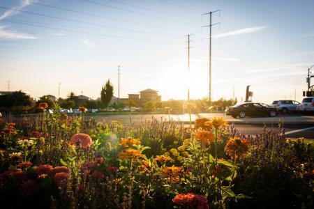 停车场, 汽车, 特写, 花, 花园, 购物, 阳光