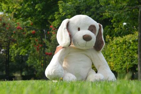 小狗, 狗, 自然, 玩具, 毛绒, 软