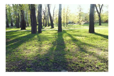 乌克兰, 树木, 春天, 景观, 绿党, 树, 光