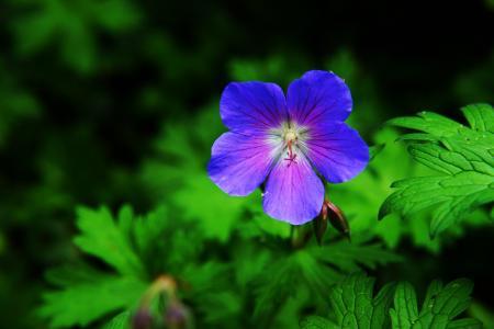 花, 开花, 绽放, 野, 雨滴, 初夏, 花园