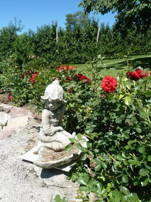 花园, 石图, 玫瑰床