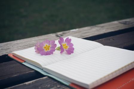 板凳, 花, 笔记本, 钢笔, 木制, 记事本, 木桌